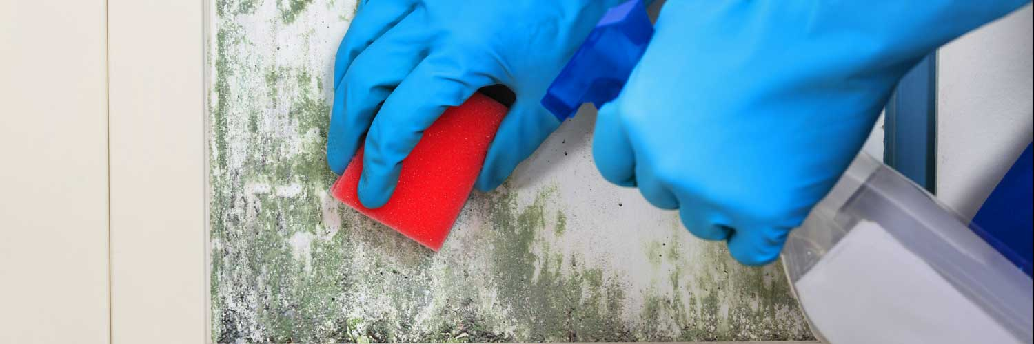 What Causes Mold on Interior Walls